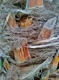 结构树的纹理 免版税库存照片