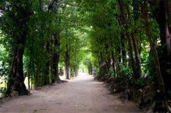 结构树的隧道 免版税图库摄影