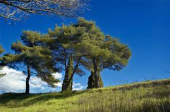 结构树的 库存图片