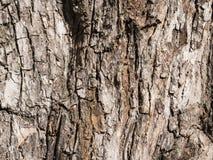 结构树纹理吠声 库存图片
