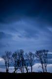 结构树组和风暴 库存图片