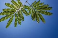 结构树细致的绿色叶子   库存图片
