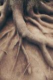 结构树老根,在森林里。 横向 库存图片