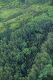 结构树考艾岛 库存照片