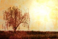 结构树葡萄酒 免版税库存照片