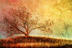 结构树葡萄酒 免版税图库摄影