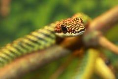 结构树蛇 免版税库存图片