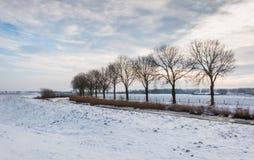 结构树行除一条弯曲的乡下公路以外的在冬天 免版税库存照片