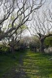结构树被排行的路径 免版税库存照片