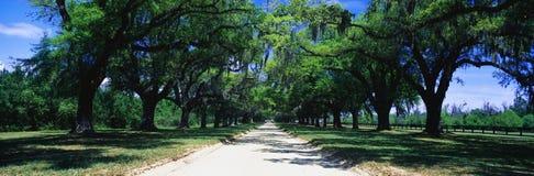 结构树被排行的路,圣安东尼奥, TX 免版税库存照片