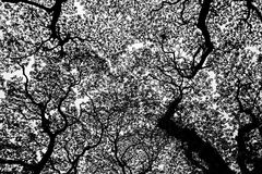 结构树静脉 免版税库存图片