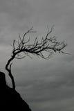 结构树风化了 免版税库存图片