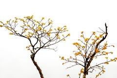 结构树黄色 免版税库存照片