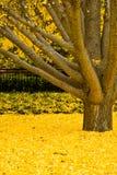 结构树黄色 免版税图库摄影
