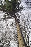 结构树 图库摄影