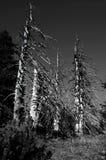 结构树 库存照片