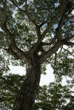 结构树 免版税图库摄影