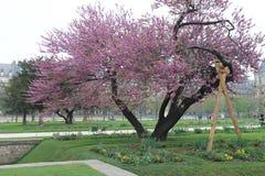 结构树 免版税库存照片