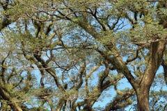 结构树 库存图片