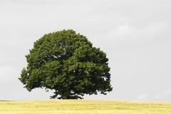 结构树 免版税库存图片