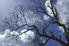 结构树wnter 库存图片