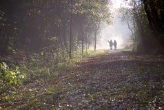 结构森林 免版税图库摄影