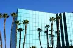 结构现代棕榈树 库存照片