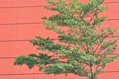 结构背景绿色植物红色 免版税库存图片