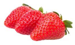 结果实宏观草莓草莓 图库摄影
