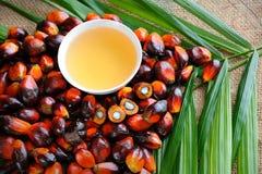 结果实油棕榈树 库存照片