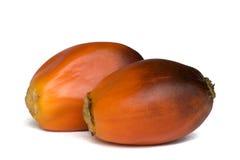 结果实油棕榈树 免版税库存图片