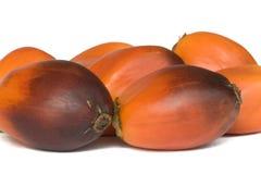 结果实油棕榈树 库存图片