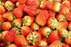 结果实草莓 库存照片