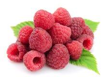 结果实莓 免版税图库摄影