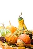 结果实蔬菜叶 免版税库存照片