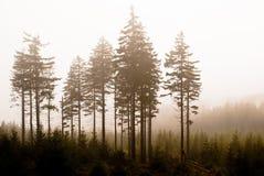结算雾结构树 免版税库存照片