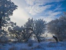 结霜灰白结构树 免版税库存照片