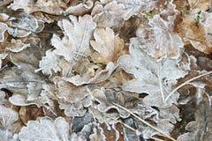 结霜的叶子 免版税库存照片