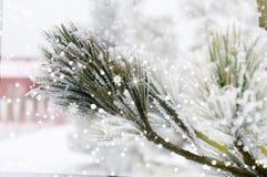 结霜的杉木分支和雪花 库存照片