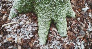 结霜的树和叶子 免版税库存照片