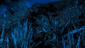 结霜的植物在夜结冰以后 库存图片
