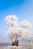 结霜的横向结构树冬天 免版税库存照片