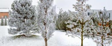 结霜的结构树 免版税库存图片