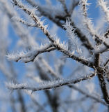 结霜的结构树 免版税图库摄影