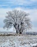 结霜的结构树 图库摄影