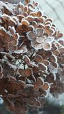 结霜的花 库存图片