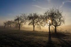 结霜的苹果树 免版税库存照片