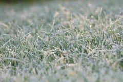 结霜的草甸 库存照片