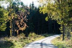 绕有由后面照的五颜六色的树的石渣路 免版税库存图片