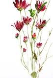 绘水彩的花 库存例证